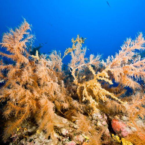 Fernando-Espino-Sound-Earth-legacy-Black-Coral